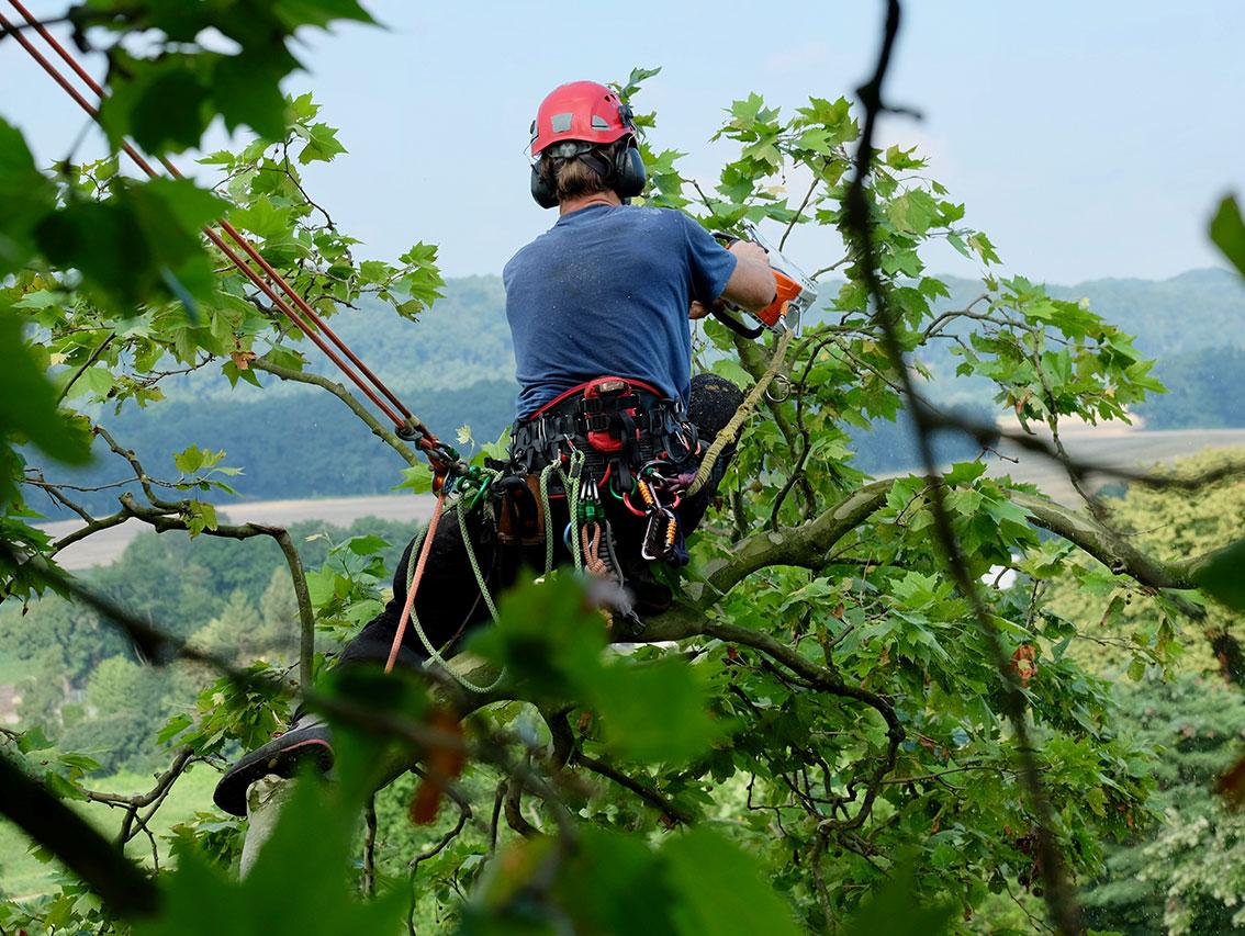 Baumpflege und Baumfällung in Essen
